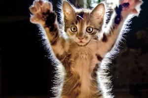 Un chaton tout mignon pour illustrer la gentillesse. Beurk.